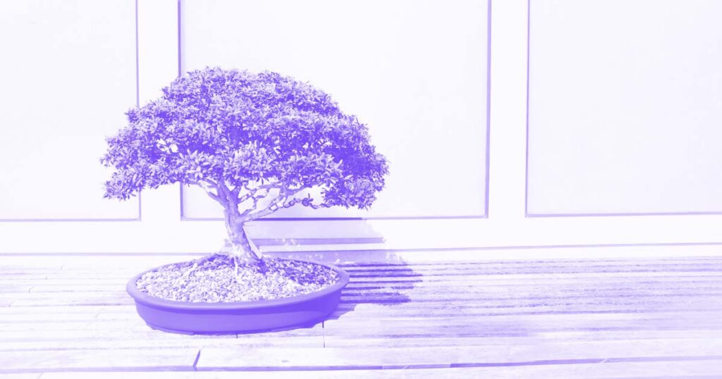 site bonsai 8 dicas activemedia